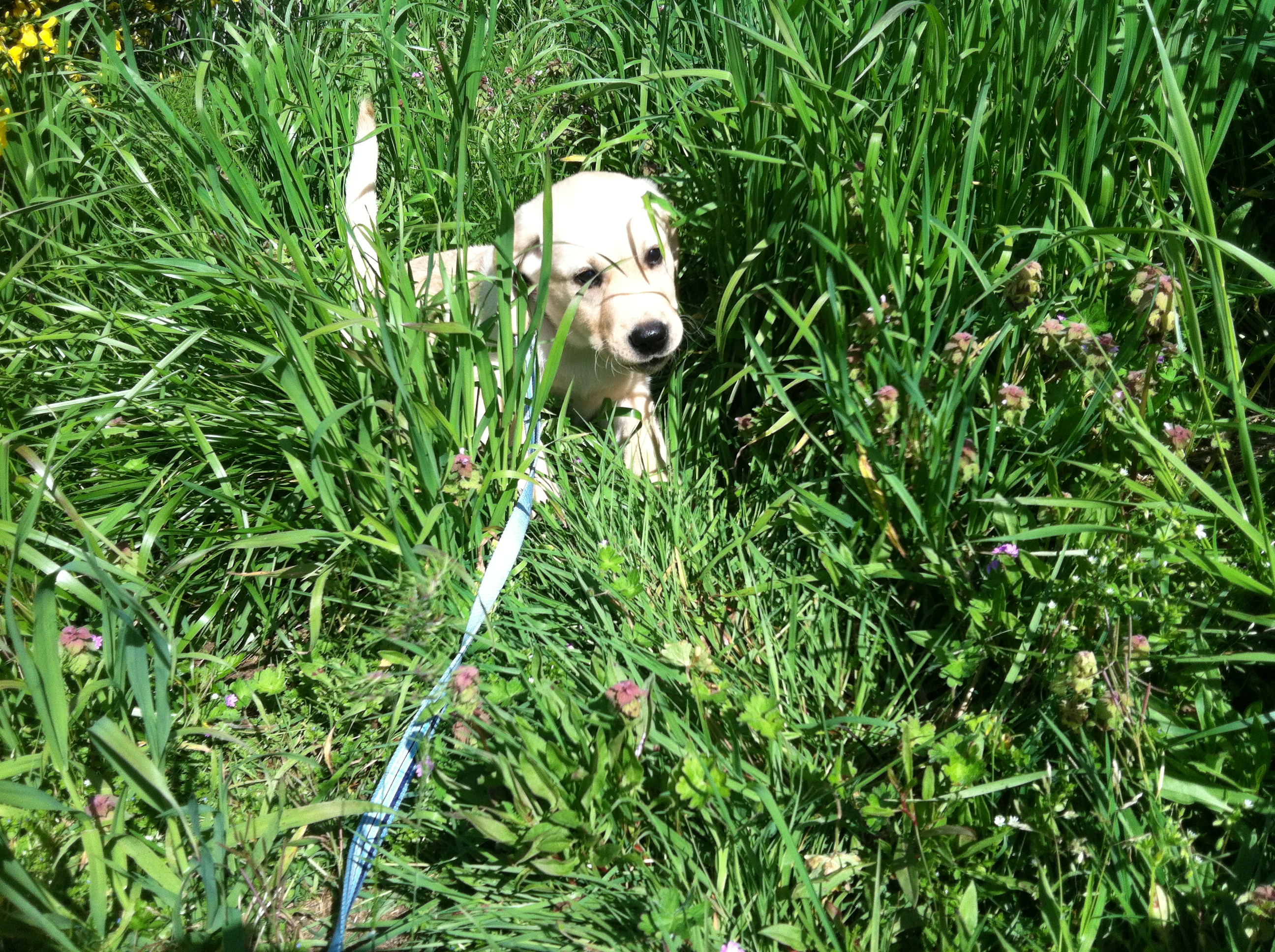 dog-vs-rug-blog---puppy-in-tall-grass.jpg
